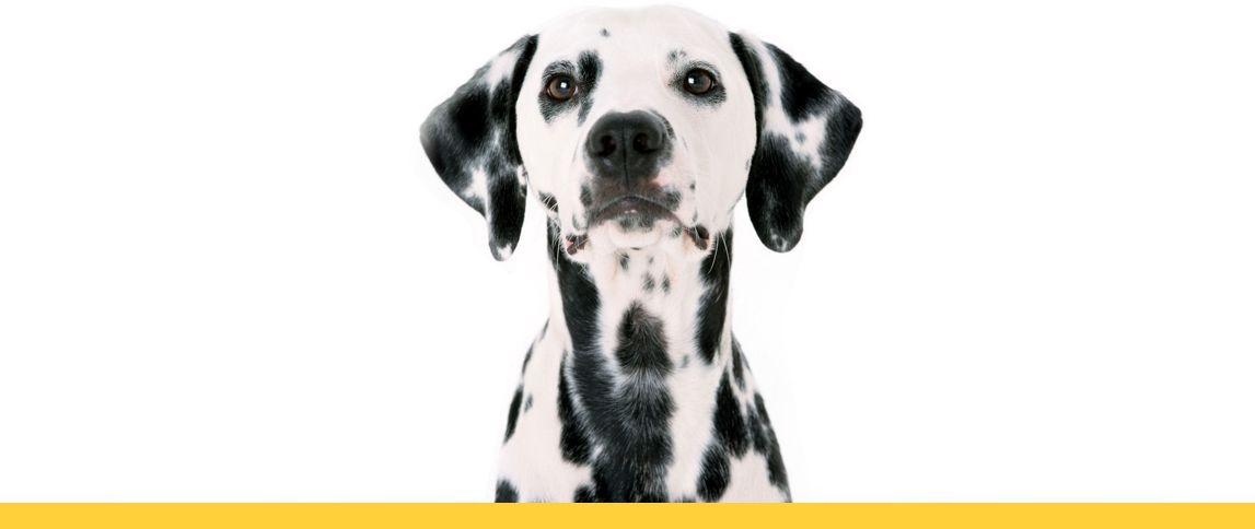 Далматинец расскажет как выбрать корм для собаки